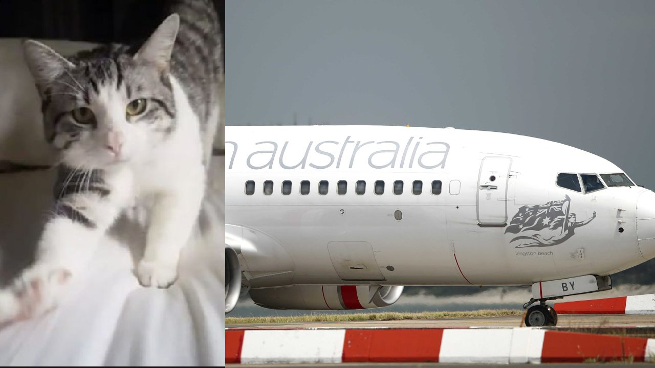 Miraculous find of missing airport cat after 2 days