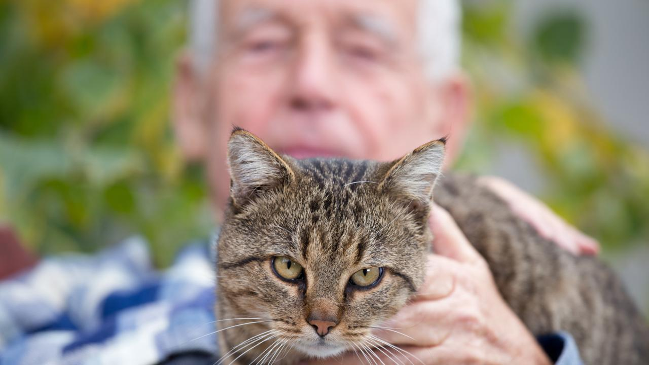 12 dangerous mistakes cat owners should never make