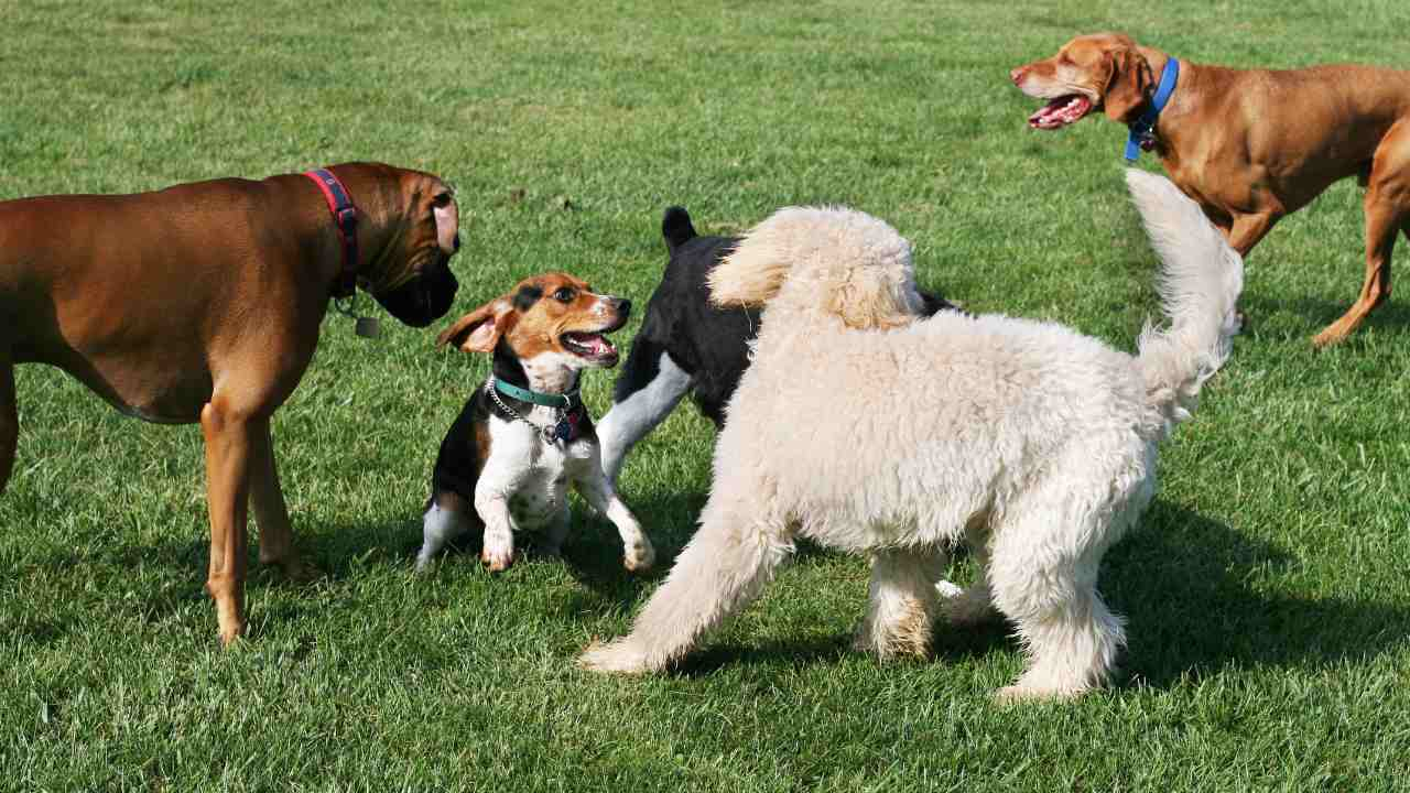 What you should do when your dog gets into a fight at the dog park