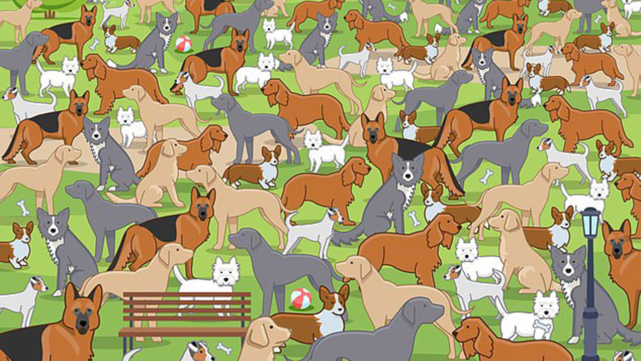 Can YOU spot the puppy hidden in the dog park?