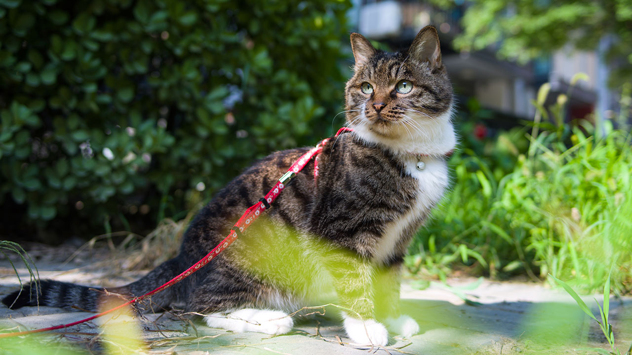 Poor kitty! Council enforces law that bans cats from going outdoors