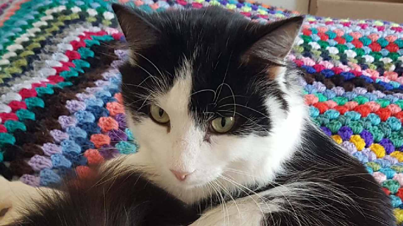 Cat makes incredible transformation after heartbreaking abuse