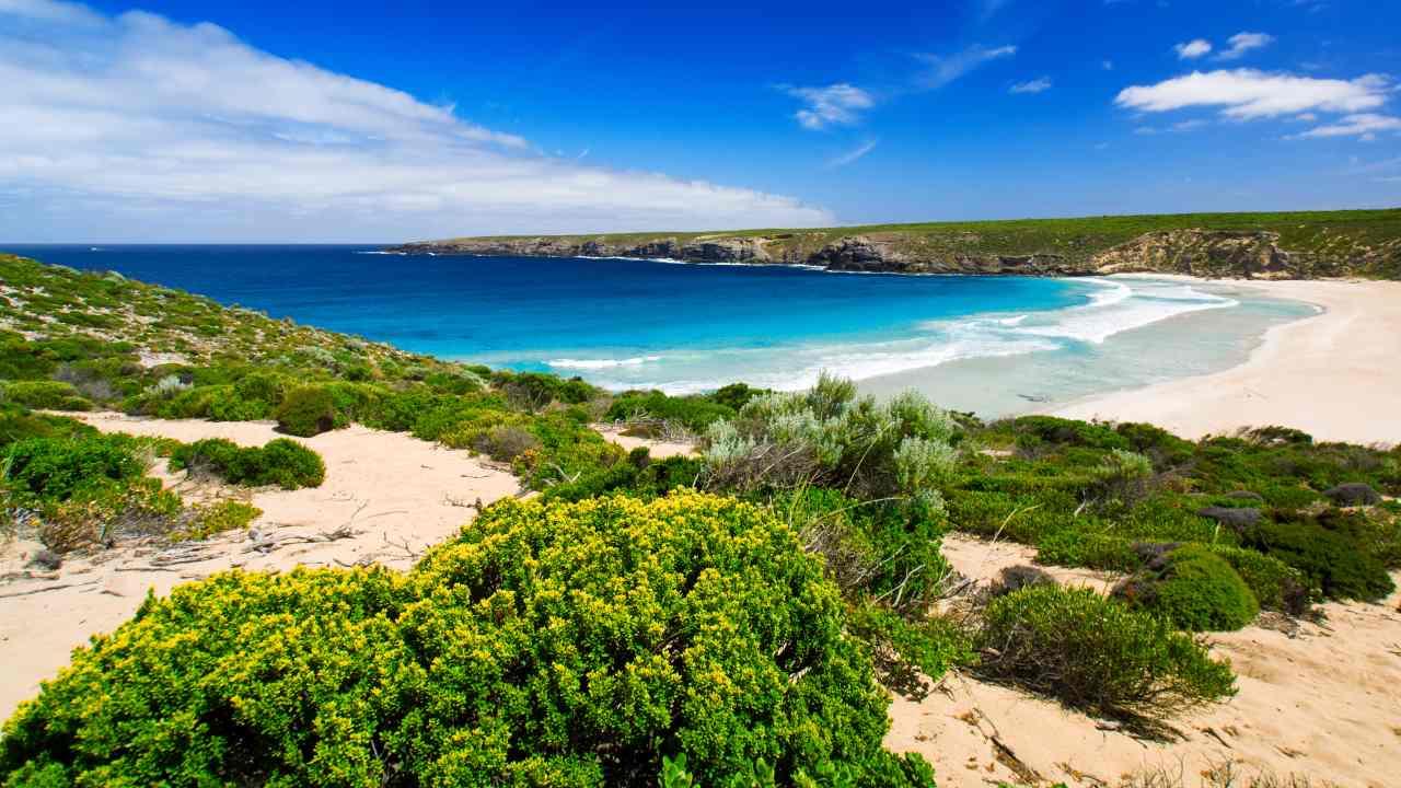 Hop to it! Head to Kangaroo Island
