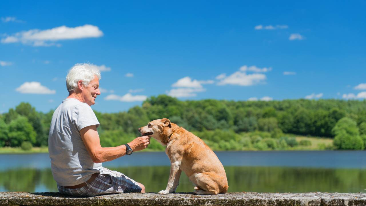 5 everyday habits of great dog owners