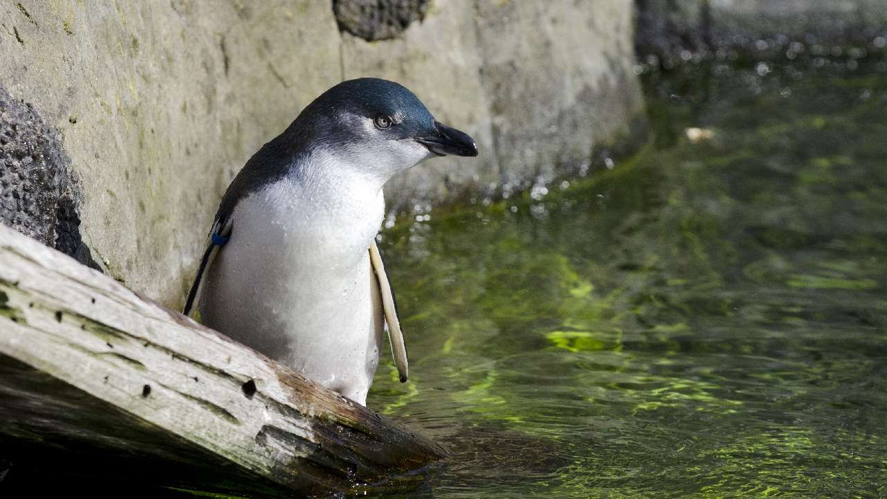 """We're losing our penguins"": Stricter penalties demanded after a spate of dog attacks"
