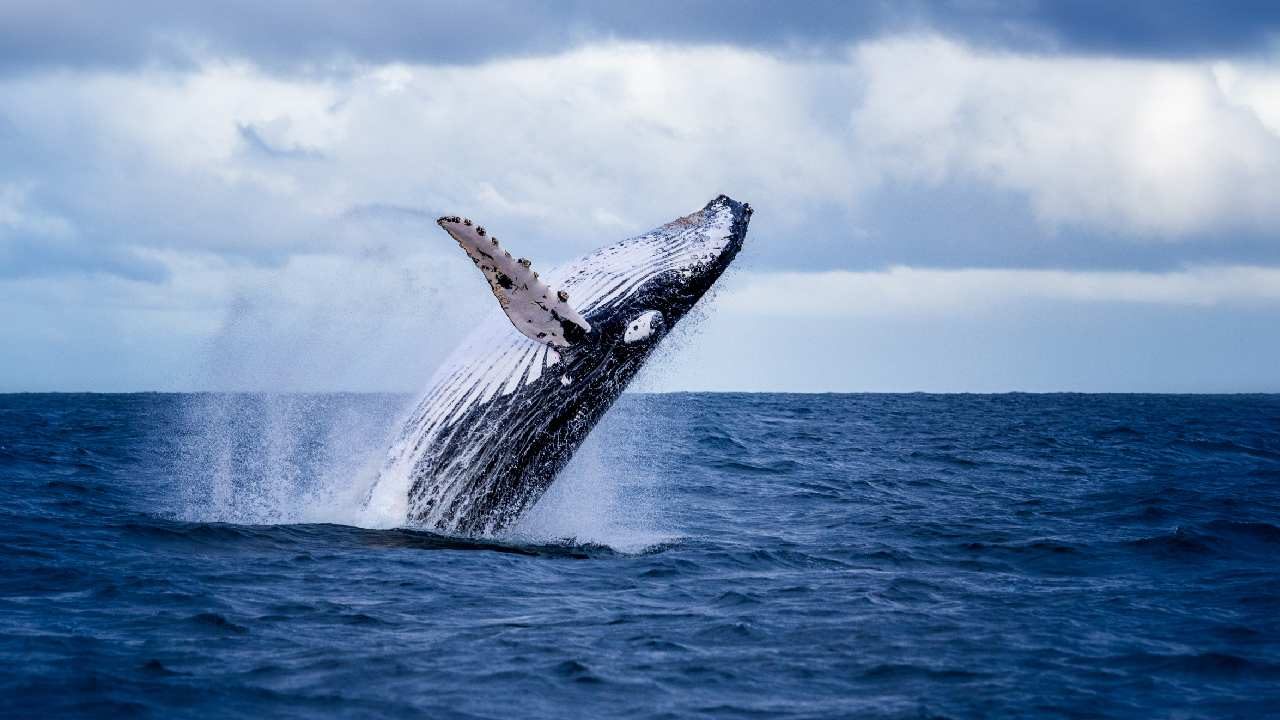 Having a whale of a time: What to do in Sydney