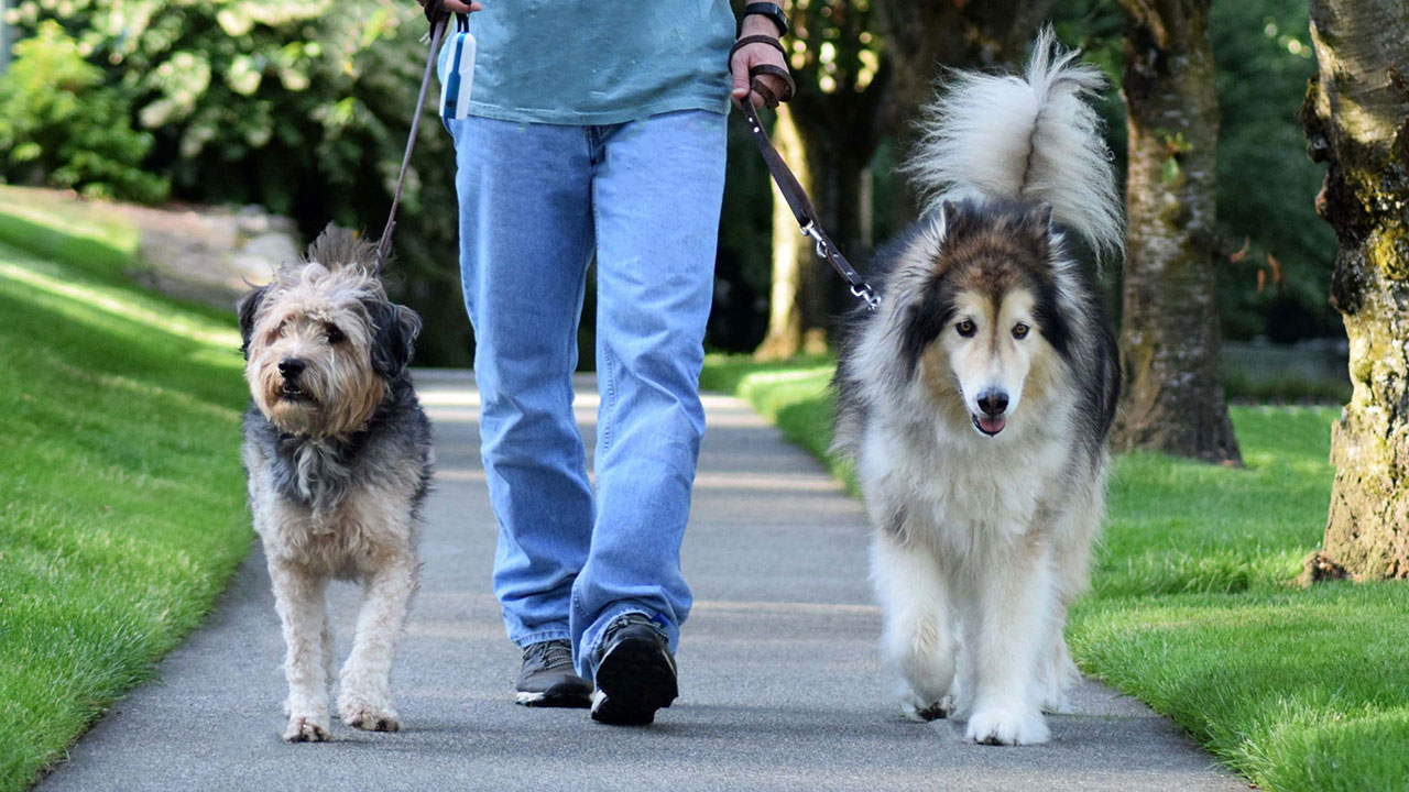 """""""Let me out!"""": This Aussie city will fine you for not walking your dog"""