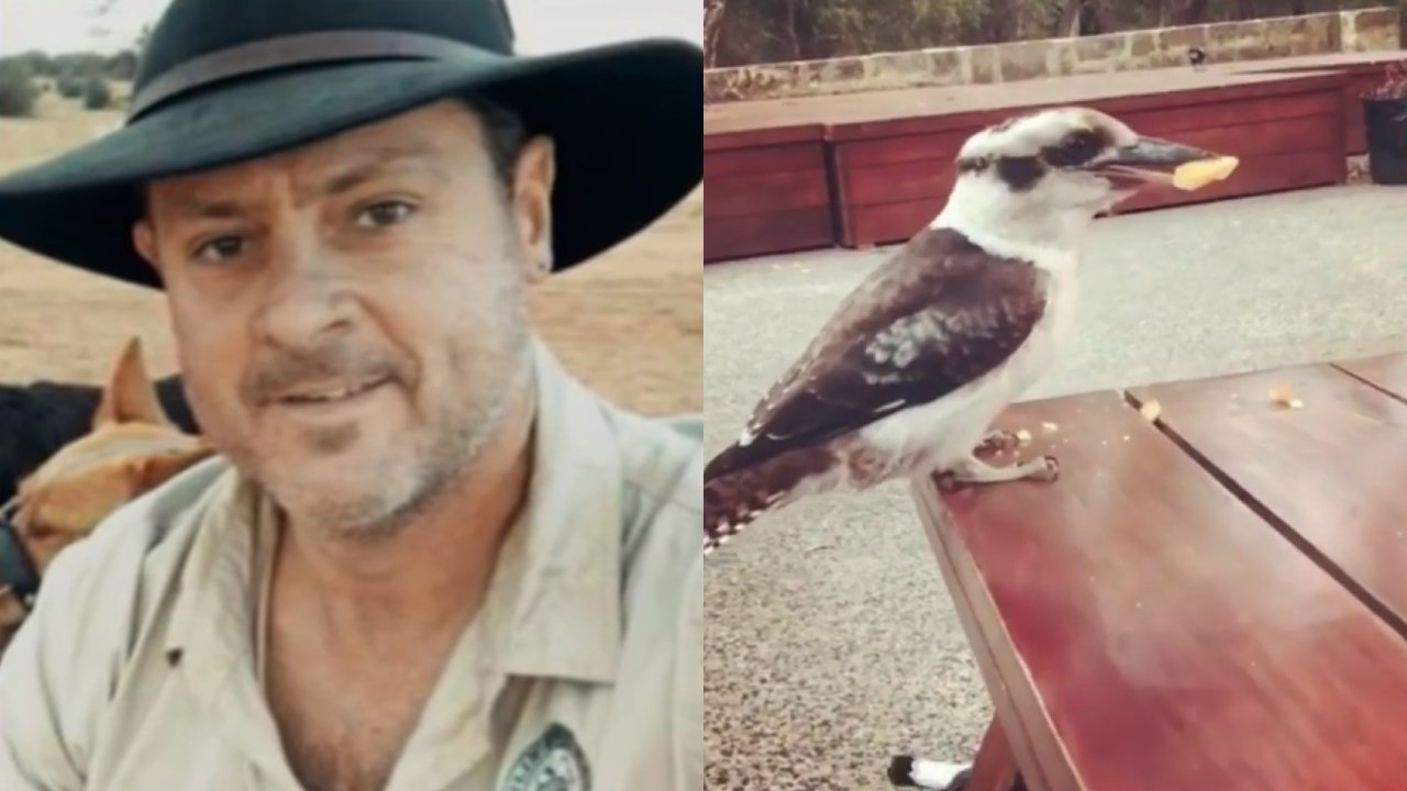 """Dangerous nuisance animal"": Man accused of ripping kookaburra's head off named and shamed"