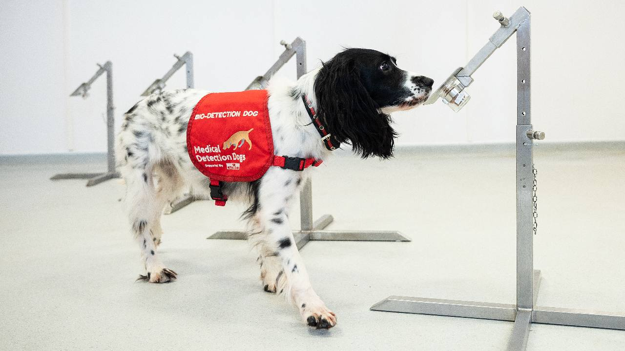 Dogs may be able to 'sniff out' coronavirus, study hopes