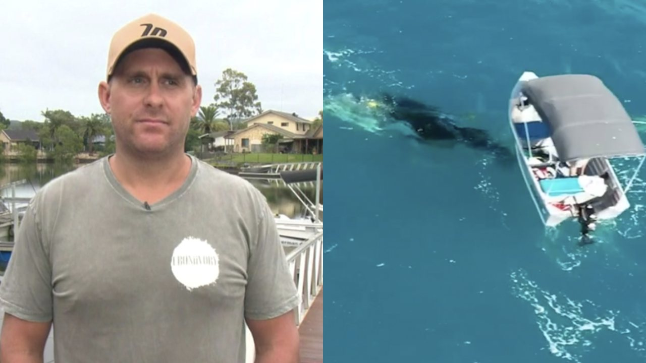 Man who rescued baby whale plans to donate fine funds to marine charities