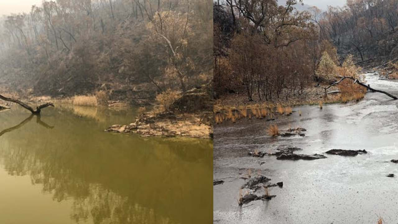 Before and after: see how bushfire and rain turned the Macquarie perch's home to sludge