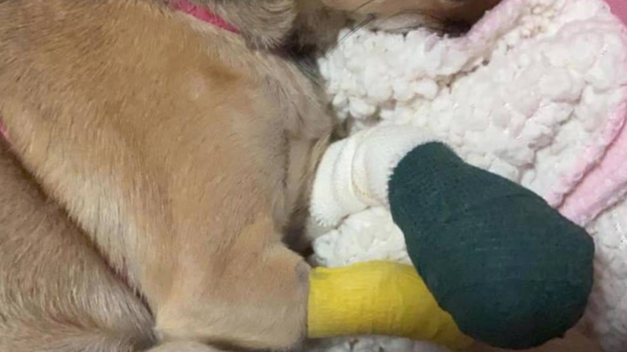 Dog severely injured in Bunnings escalator incident