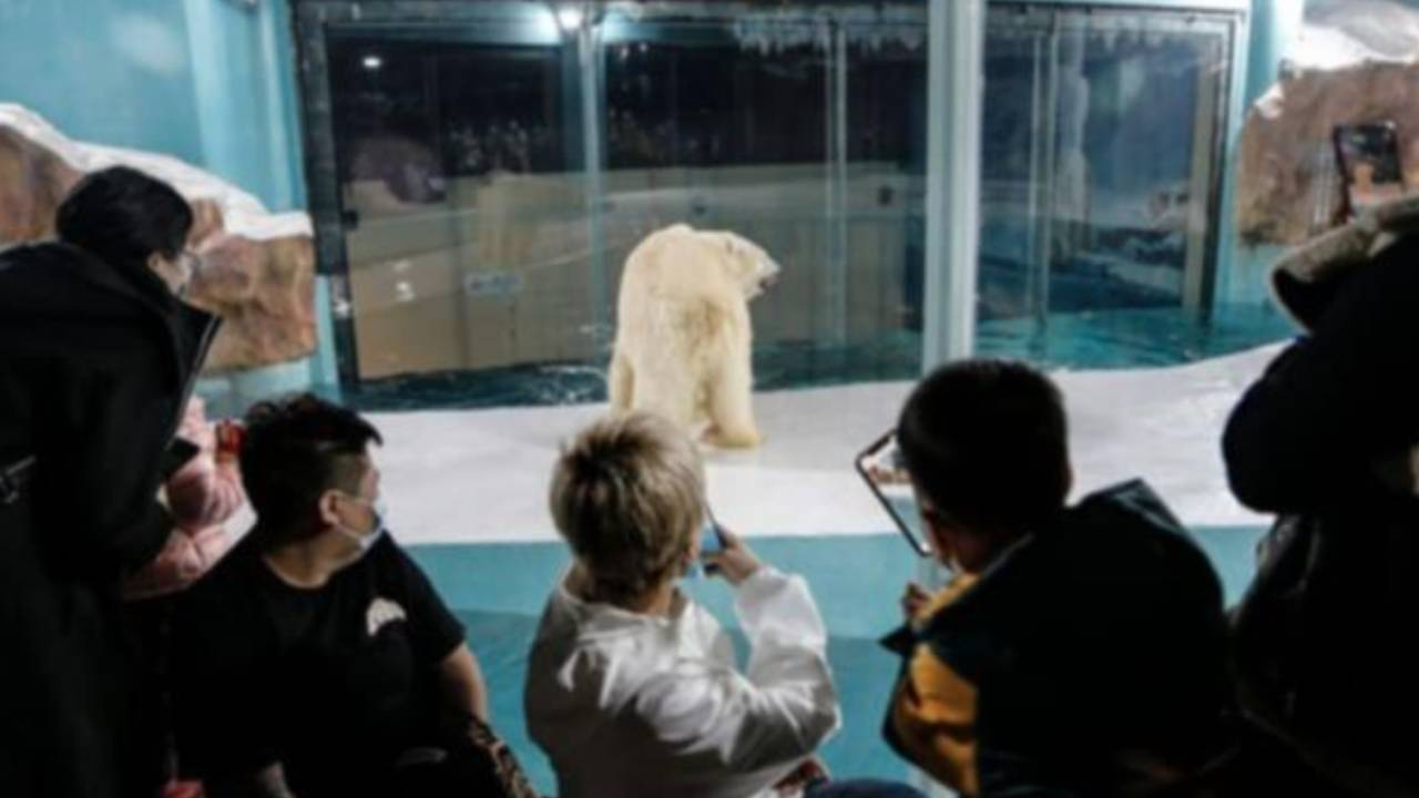 """New """"Polar Bear Hotel"""" in China sparks outrage"""