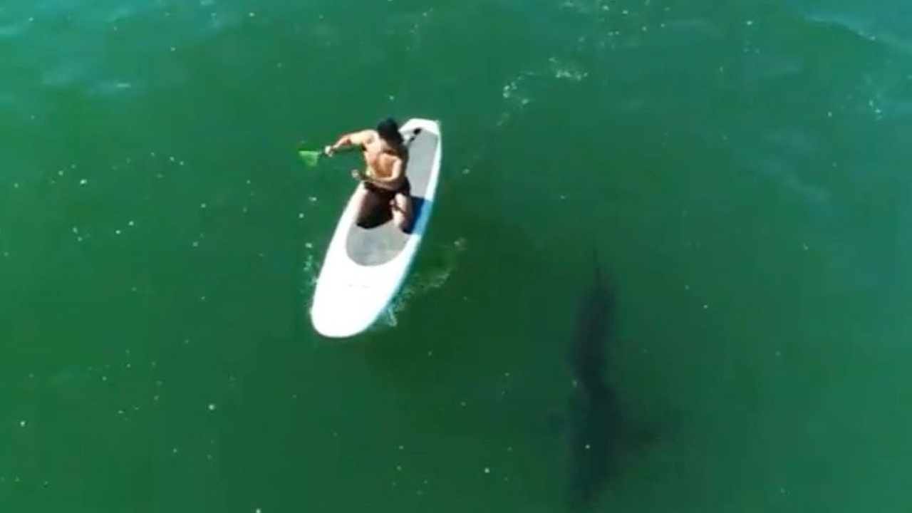 Orlando Bloom has close encounter with Great White Shark