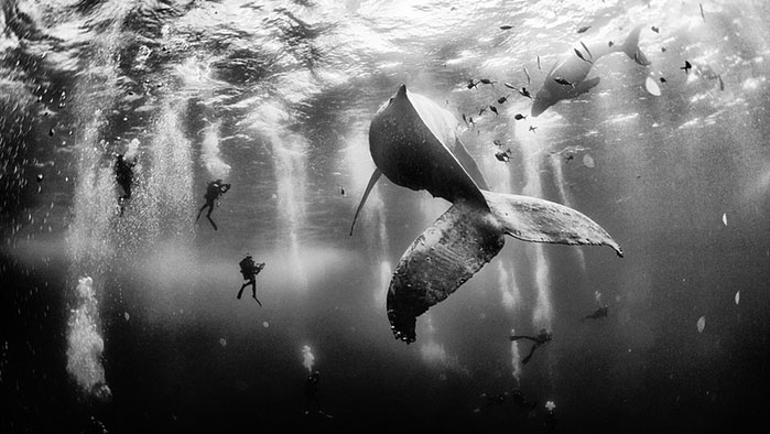 Top 4 winners of the National Geographic Photo Contest 2015 will amaze you
