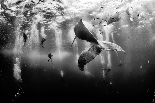 National Geographic Photo Winner 2015