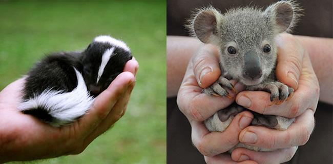14 teeny tiny animals