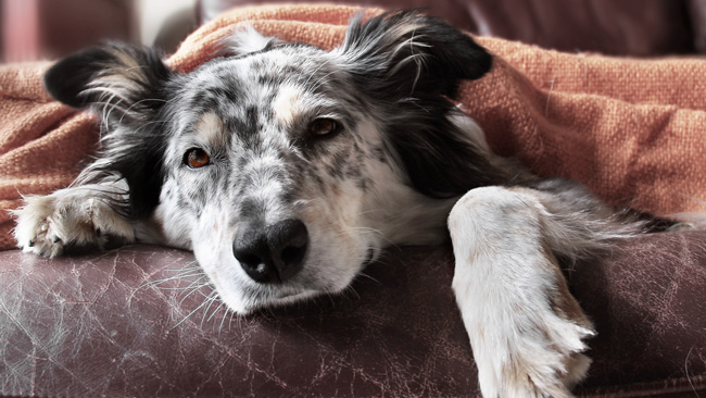 How your mental health can affect your dog